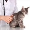 Ветеринарные клиники в Вербилках